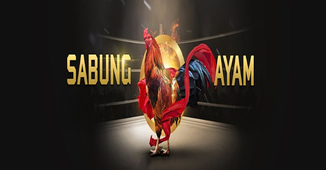 Cara Menang Beruntun Main Judi Sabung Ayam Online
